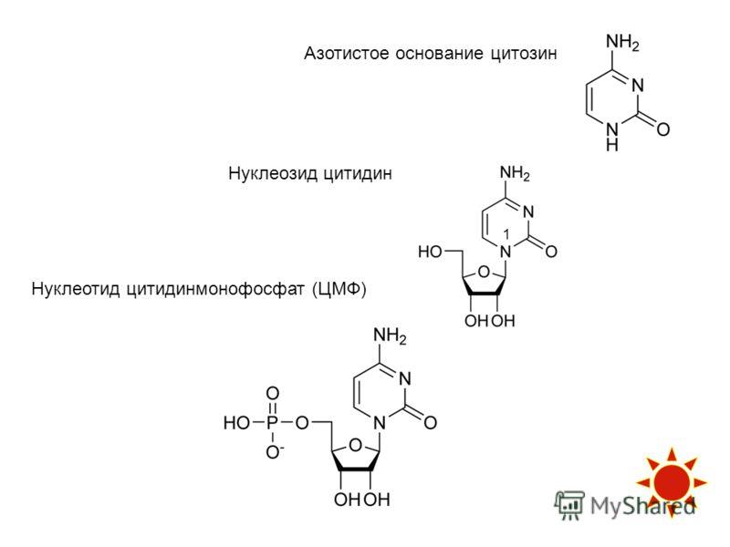 Азотистое основание цитозин Нуклеозид цитидин Нуклеотид цитидинмонофосфат (ЦМФ) 1