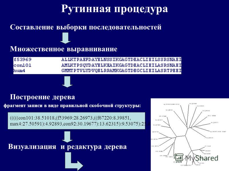 Рутинная процедура Составление выборки последовательностей Множественное выравнивание Построение дерева фрагмент записи в виде правильной скобочной структуры: Визуализация и редактура дерева (((((con101:38.51018,(f53969:28.26973,((f67220:8.39851, max