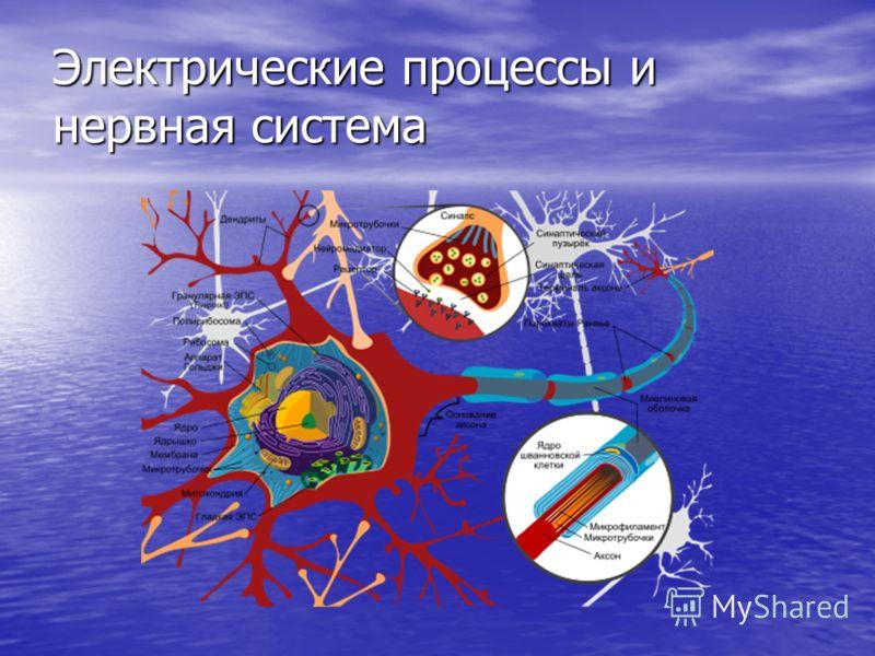 Электрические процессы и нервная система