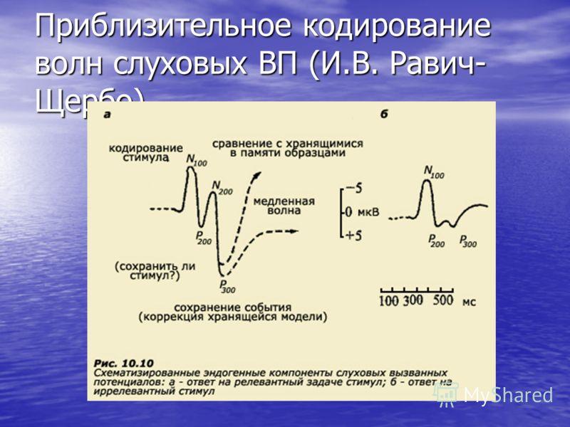 Приблизительное кодирование волн слуховых ВП (И.В. Равич- Щербо)