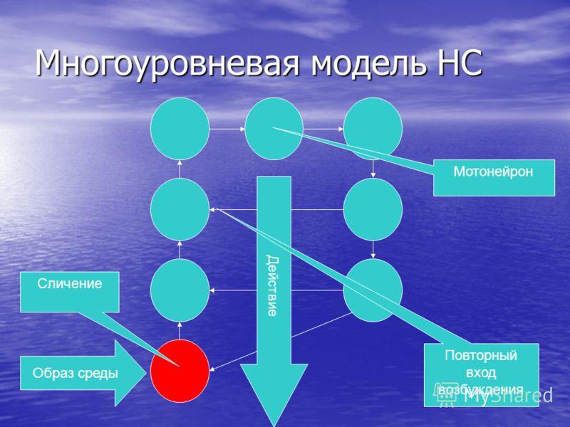 Многоуровневая модель НС Образ среды Сличение Действие Повторный вход возбуждения Мотонейрон