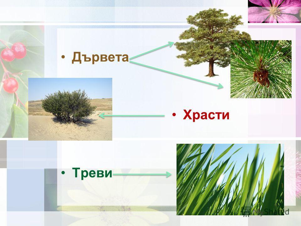 Дървета Храсти Треви