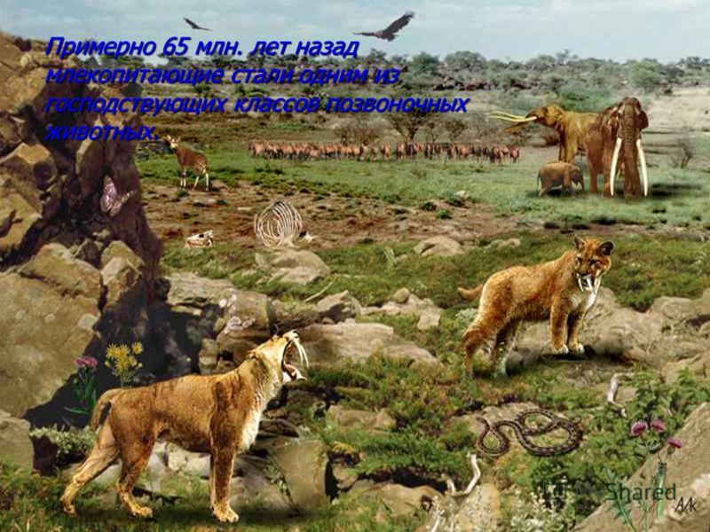 Примерно 65 млн. лет назад млекопитающие стали одним из господствующих классов позвоночных животных.