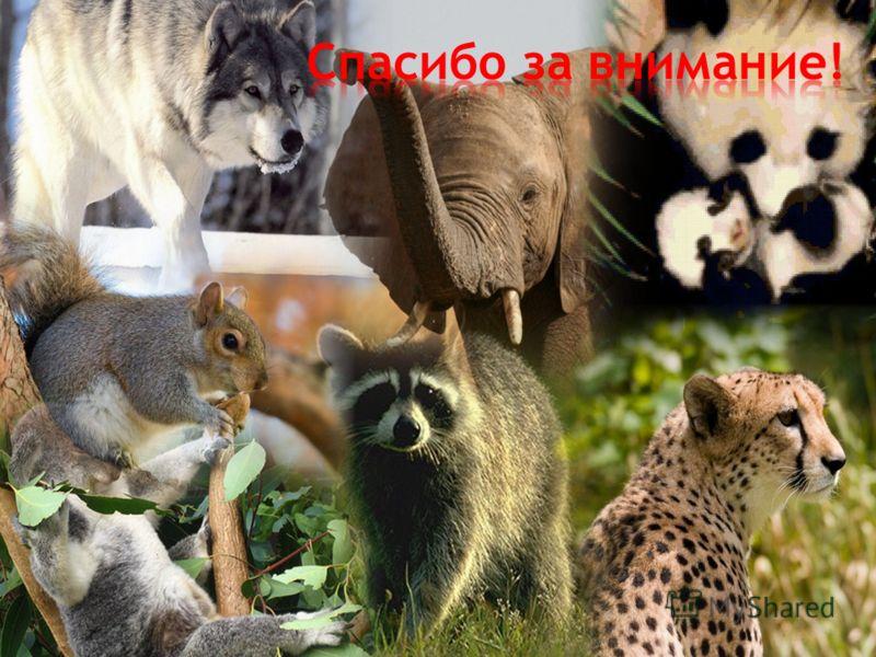 - по учебнику § 51 - подготовить материал « Мой любимый зверь».