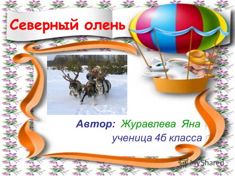 Северный олень Автор: Журавлева Яна ученица 4б класса