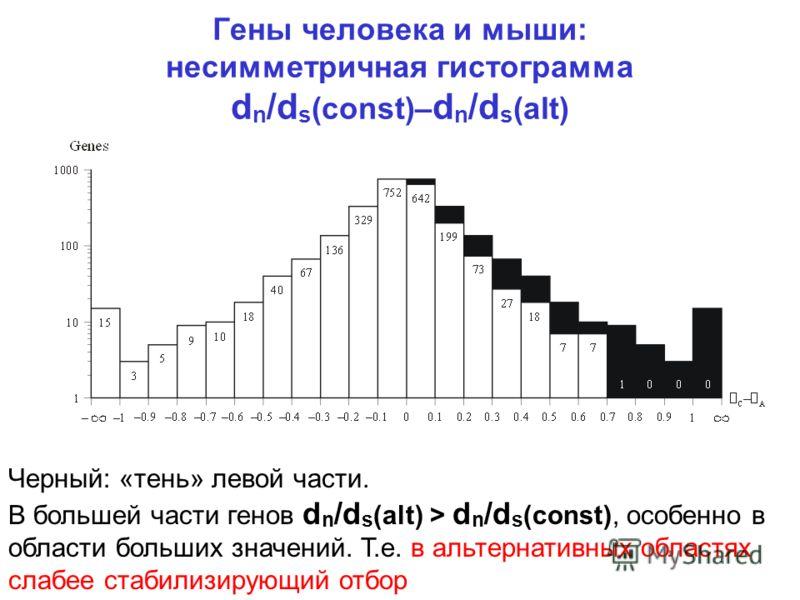 Гены человека и мыши: несимметричная гистограмма d n /d s (const)– d n /d s (alt) Черный: «тень» левой части. В большей части генов d n /d s (alt) > d n /d s (const), особенно в области больших значений. Т.е. в альтернативных областях слабее стабилиз