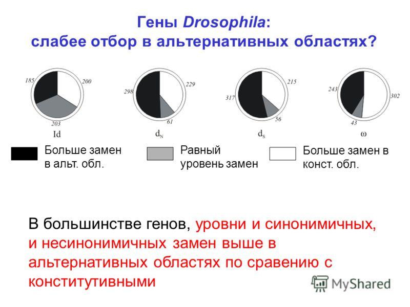 Гены Drosophila: слабее отбор в альтернативных областях? Больше замен в альт. обл. Равный уровень замен Больше замен в конст. обл. В большинстве генов, уровни и синонимичных, и несинонимичных замен выше в альтернативных областях по сравению с констит