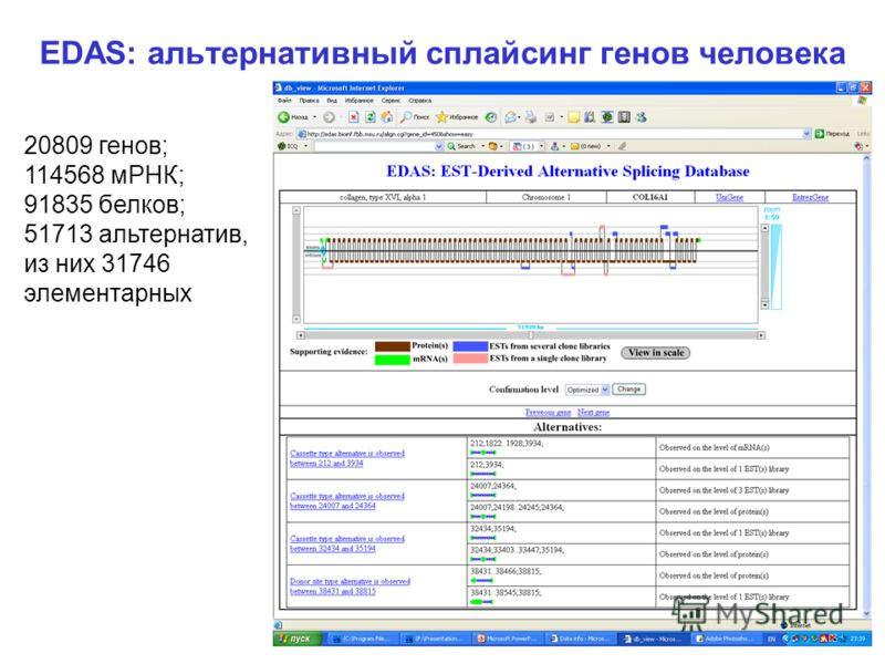 EDAS: альтернативный сплайсинг генов человека 20809 генов; 114568 мРНК; 91835 белков; 51713 альтернатив, из них 31746 элементарных