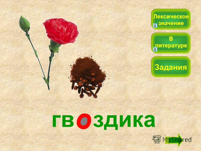 гв здика Лексическое значение Задания В литературе