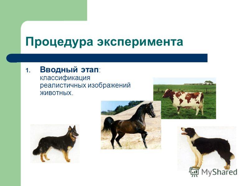 Процедура эксперимента 1. Вводный этап : классификация реалистичных изображений животных.