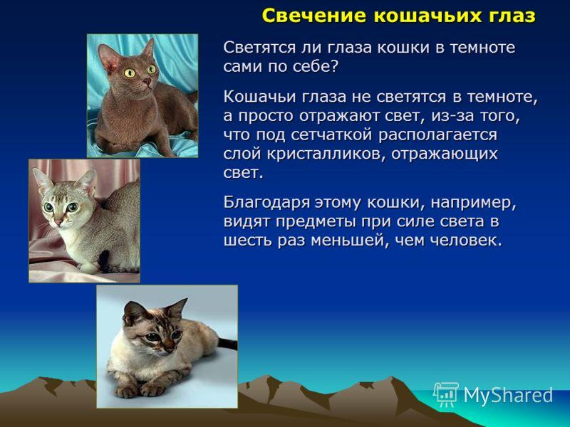 С вечение кошачьих глаз Светятся ли глаза кошки в темноте сами по себе? Кошачьи глаза не светятся в темноте, а просто отражают свет, из-за того, что под сетчаткой располагается слой кристалликов, отражающих свет. Благодаря этому кошки, например, видя