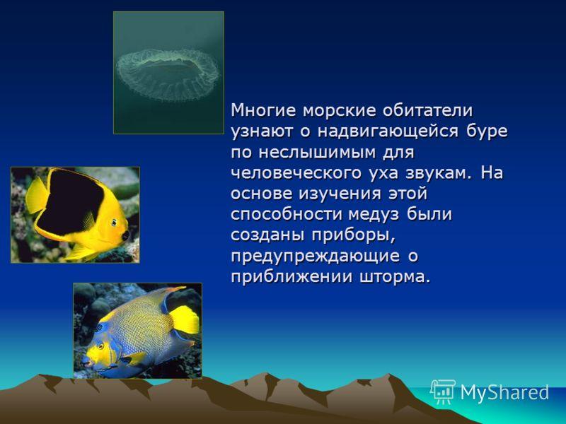 Многие морские обитатели узнают о надвигающейся буре по неслышимым для человеческого уха звукам. На основе изучения этой способности медуз были созданы приборы, предупреждающие о приближении шторма.