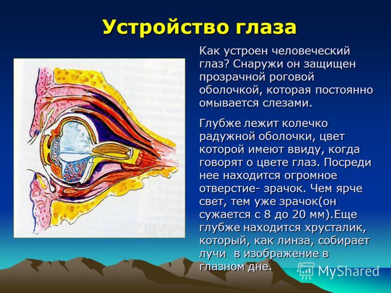 Устройство глаза Как устроен человеческий глаз? Снаружи он защищен прозрачной роговой оболочкой, которая постоянно омывается слезами. Глубже лежит колечко радужной оболочки, цвет которой имеют ввиду, когда говорят о цвете глаз. Посреди нее находится