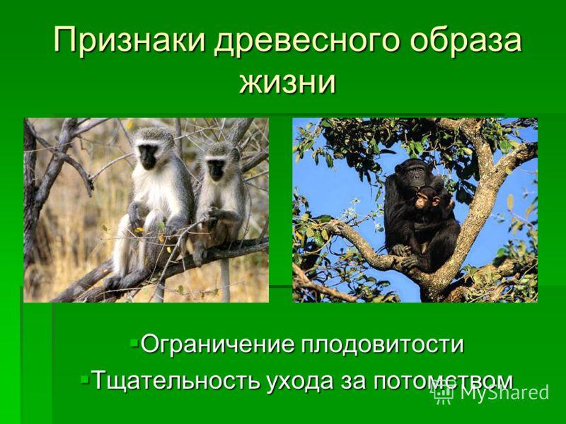 Признаки древесного образа жизни Ограничение плодовитости Тщательность ухода за потомством