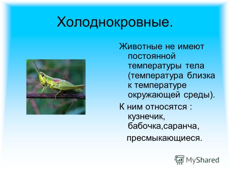Холоднокровные. Животные не имеют постоянной температуры тела (температура близка к температуре окружающей среды). К ним относятся : кузнечик, бабочка,саранча, пресмыкающиеся.
