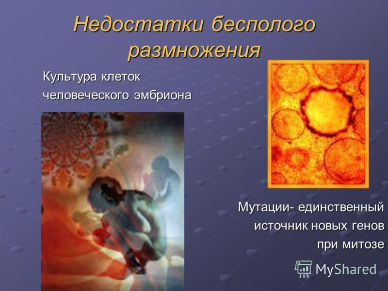 Недостатки бесполого размножения Культура клеток человеческого эмбриона Мутации- единственный источник новых генов при митозе