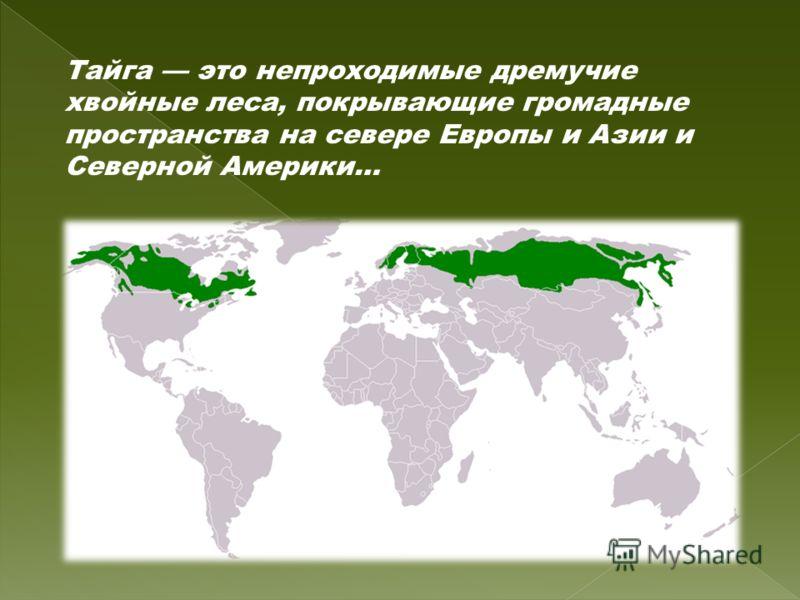 Тайга это непроходимые дремучие хвойные леса, покрывающие громадные пространства на севере Европы и Азии и Северной Америки…