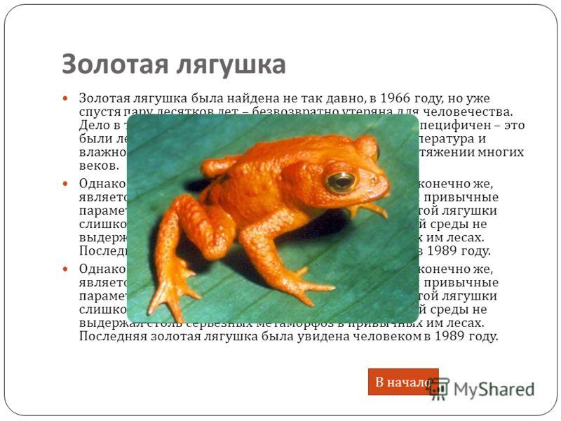 Золотая лягушка Золотая лягушка была найдена не так давно, в 1966 году, но уже спустя пару десятков лет – безвозвратно утеряна для человечества. Дело в том, что ареал их обитания был очень узок и специфичен – это были леса вокруг Монтеверде на Коста