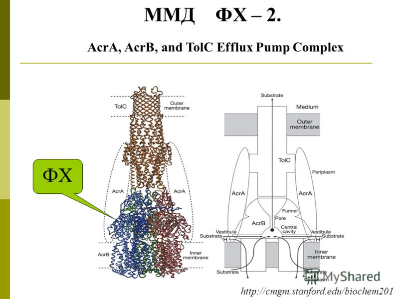AcrA, AcrB, and TolC Efflux Pump Complex ФХ ММД ФХ – 2. http://cmgm.stanford.edu/biochem201