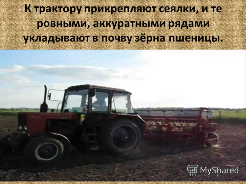 К трактору прикрепляют сеялки, и те ровными, аккуратными рядами укладывают в почву зёрна пшеницы.