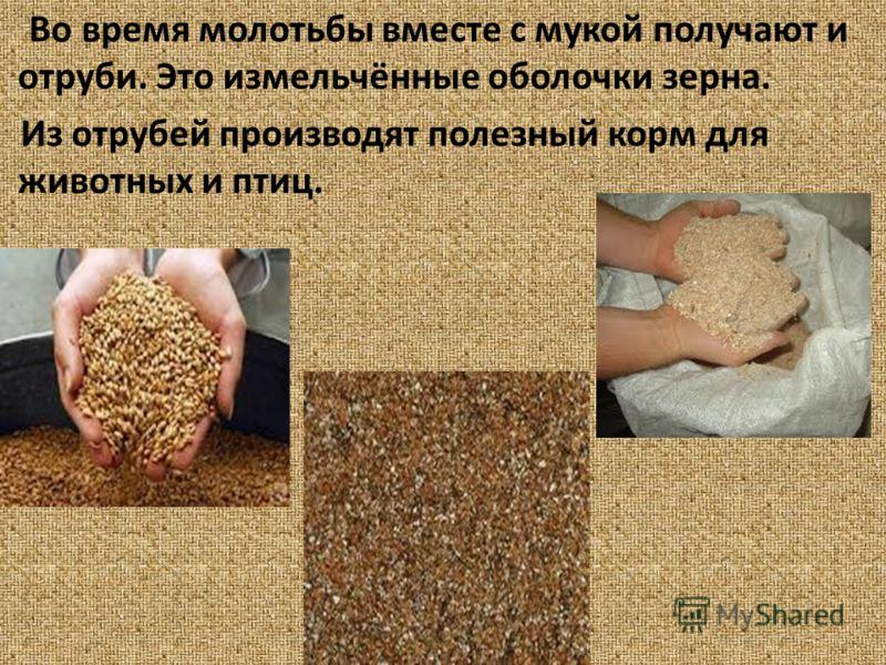 Во время молотьбы вместе с мукой получают и отруби. Это измельчённые оболочки зерна. Из отрубей производят полезный корм для животных и птиц.