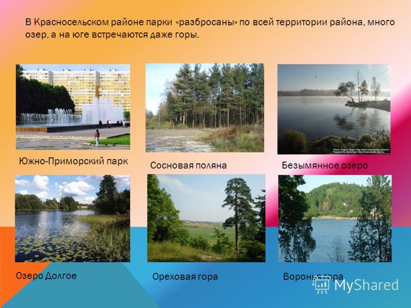 В Красносельском районе парки «разбросаны» по всей территории района, много озер, а на юге встречаются даже горы. Южно-Приморский парк Сосновая полянаБезымянное озеро Озеро Долгое Ореховая гораВоронья гора