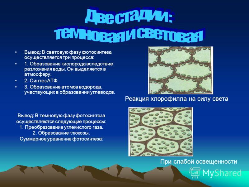 Вывод: В световую фазу фотосинтеза осуществляется три процесса: 1. Образование кислорода вследствие разложения воды. Он выделяется в атмосферу. 2. Синтез АТФ. 3. Образование атомов водорода, участвующих в образовании углеводов. Реакция хлорофилла на