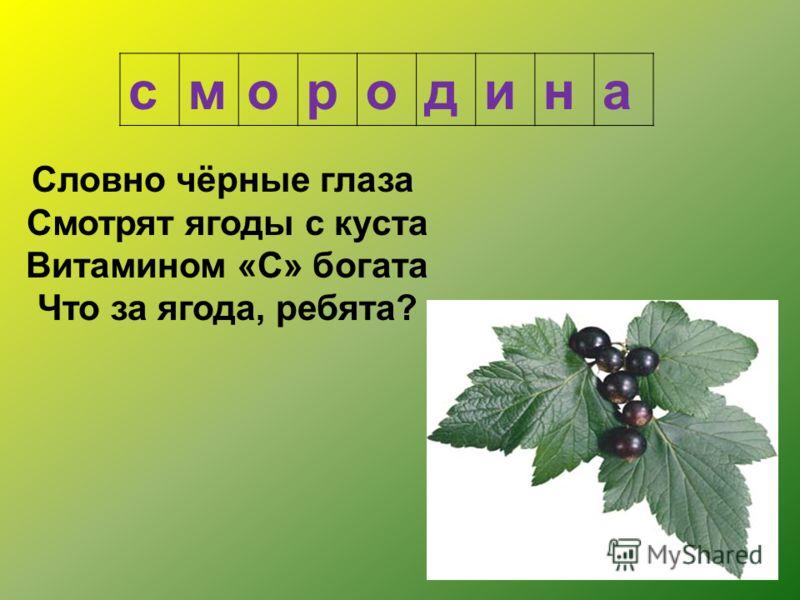 Словно чёрные глаза Смотрят ягоды с куста Витамином «С» богата Что за ягода, ребята? смородина