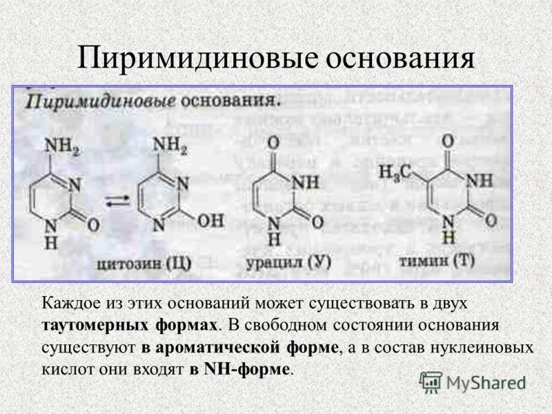 Пиримидиновые основания Каждое из этих оснований может существовать в двух таутомерных формах. В свободном состоянии основания существуют в ароматической форме, а в состав нуклеиновых кислот они входят в NH-форме.