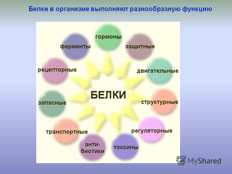Белки в организме выполняют разнообразную функцию