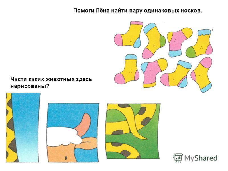 Помоги Лёне найти пару одинаковых носков. Части каких животных здесь нарисованы?