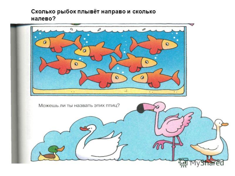 Сколько рыбок плывёт направо и сколько налево?
