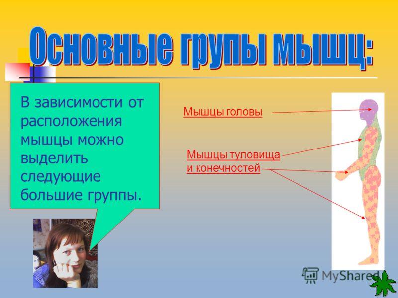 Мышцы головы Мышцы туловища и конечностей В зависимости от расположения мышцы можно выделить следующие большие группы.