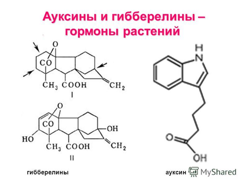 Ауксины и гибберелины –. гормоны растений гибберелиныауксин