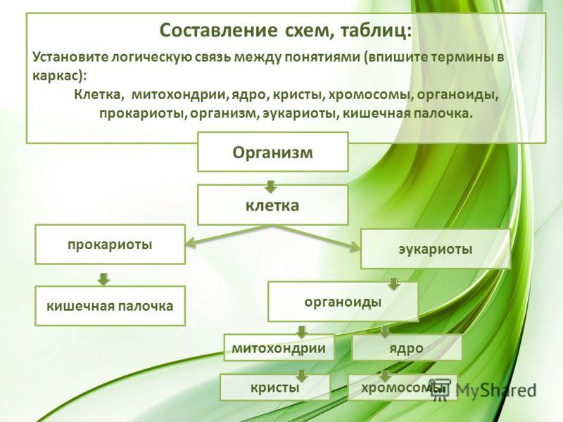 Составление схем, таблиц: Установите логическую связь между понятиями (впишите термины в каркас): Клетка, митохондрии, ядро, кристы, хромосомы, органоиды, прокариоты, организм, эукариоты, кишечная палочка. Организм клетка прокариоты эукариоты кишечна