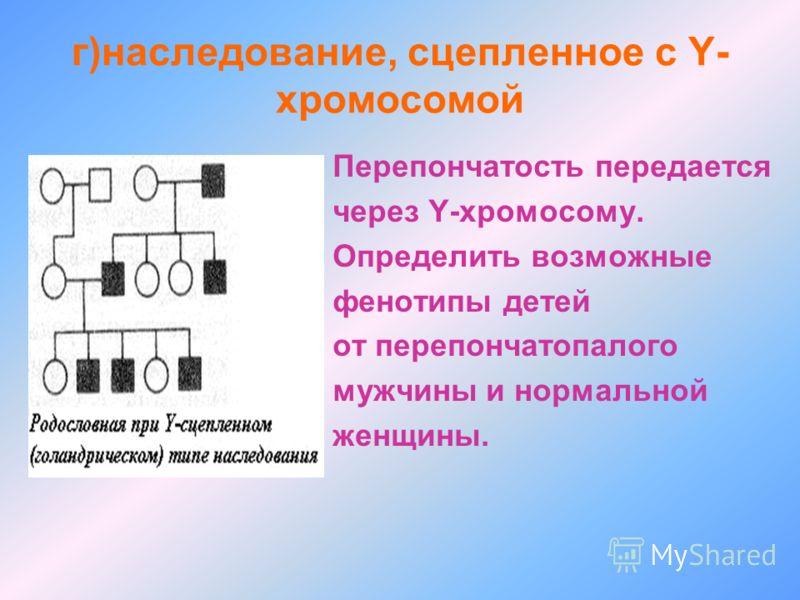 г)наследование, сцепленное с Y- хромосомой Перепончатость передается через Y-хромосому. Определить возможные фенотипы детей от перепончатопалого мужчины и нормальной женщины.
