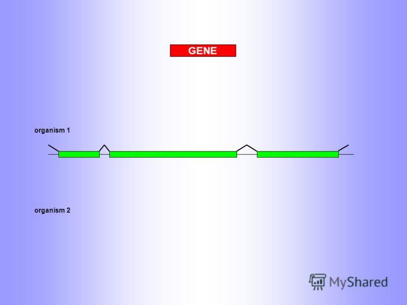 GENE organism 1 organism 2