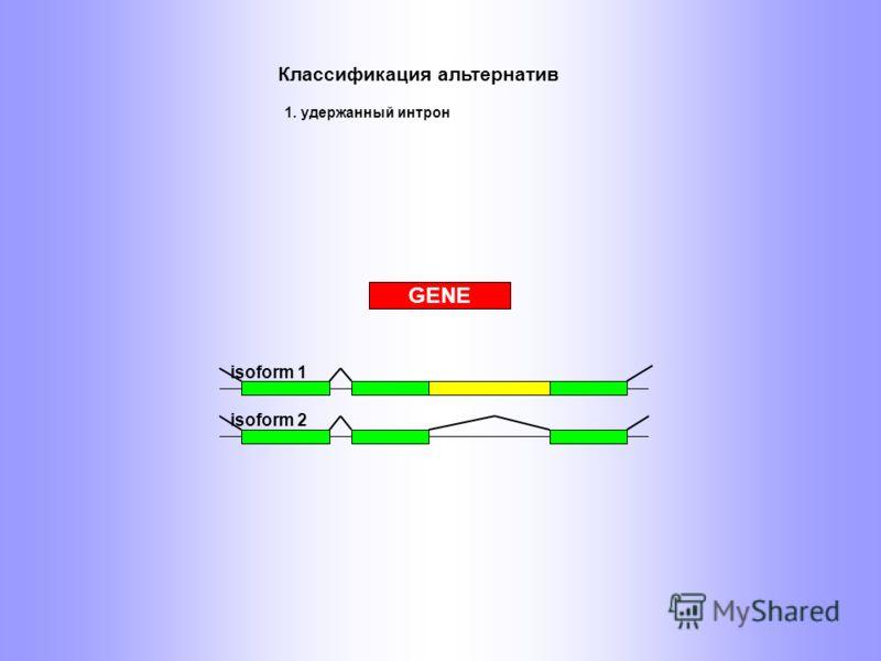 isoform 1 isoform 2 GENE Классификация альтернатив 1. удержанный интрон