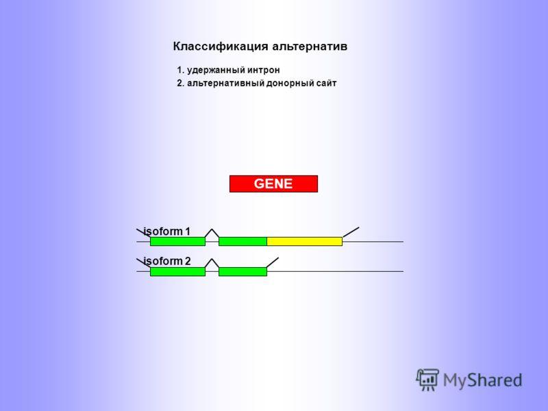 isoform 1 isoform 2 GENE 2. альтернативный донорный сайт Классификация альтернатив 1. удержанный интрон