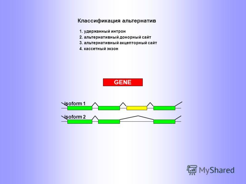 GENE isoform 1 isoform 2 2. альтернативный донорный сайт Классификация альтернатив 1. удержанный интрон 3. альтернативный акцепторный сайт 4. кассетный экзон