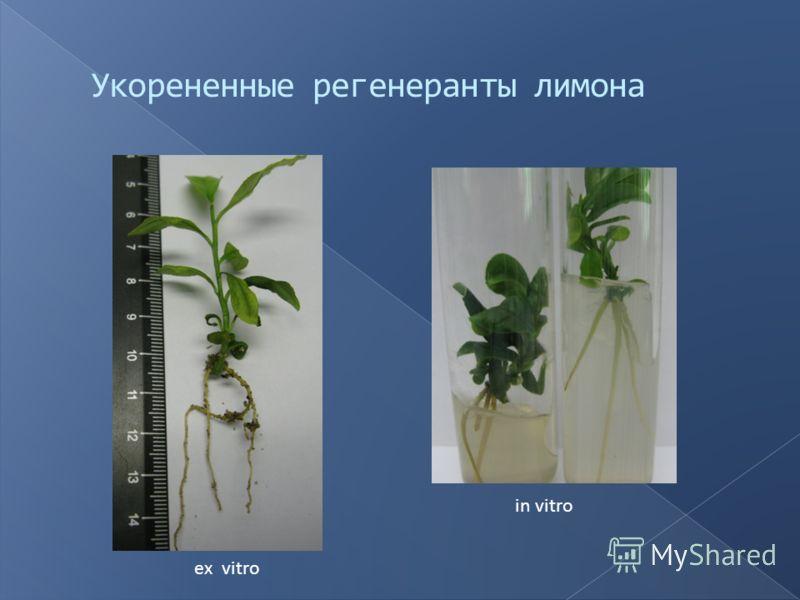 ex vitro in vitro