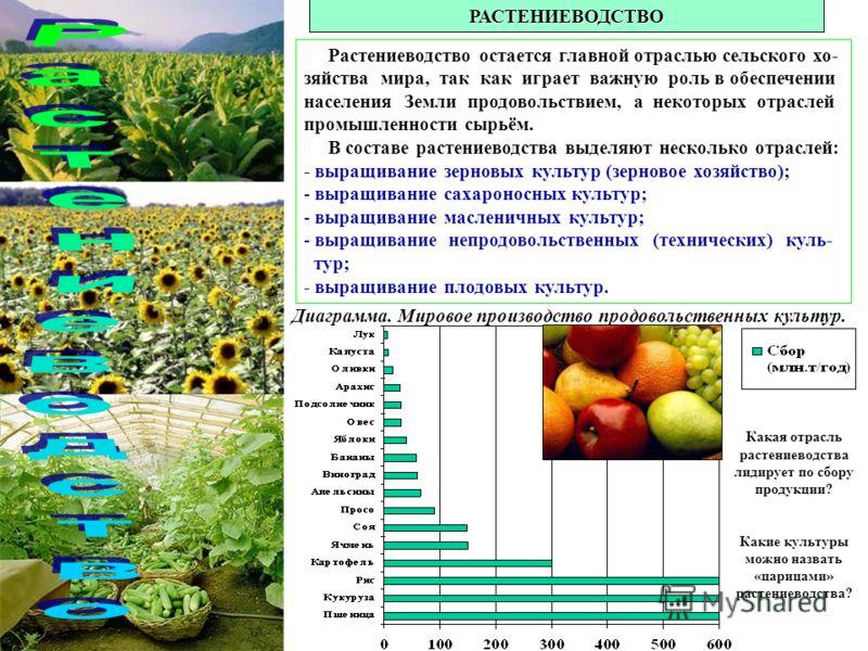 РАСТЕНИЕВОДСТВО Растениеводство остается главной отраслью сельского хо- зяйства мира, так как играет важную роль в обеспечении населения Земли продовольствием, а некоторых отраслей промышленности сырьём. В составе растениеводства выделяют несколько о