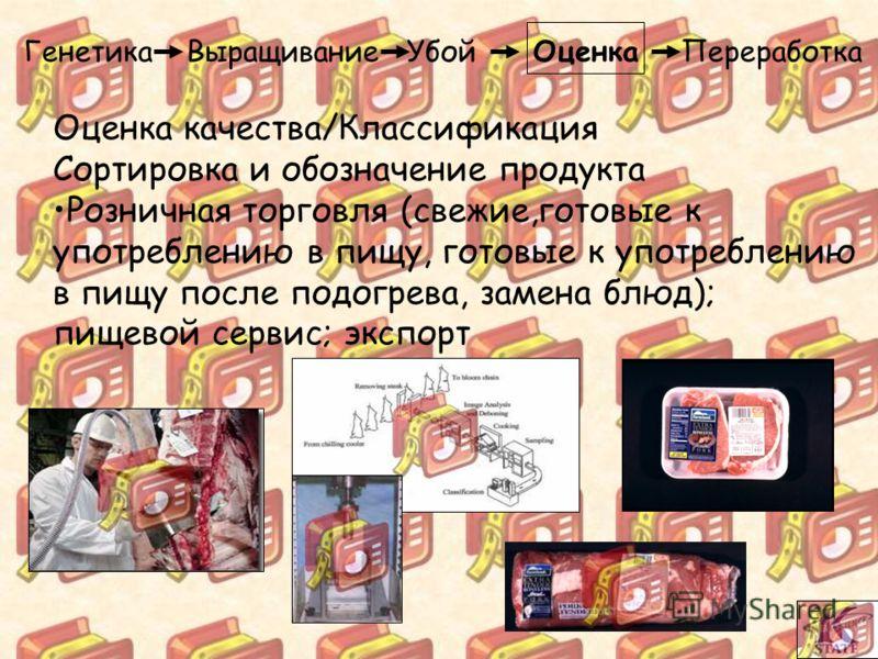 Генетика Выращивание Убой Оценка Переработка Оценка качества/Классификация Сортировка и обозначение продукта Розничная торговля (свежие,готовые к употреблению в пищу, готовые к употреблению в пищу после подогрева, замена блюд); пищевой сервис; экспор