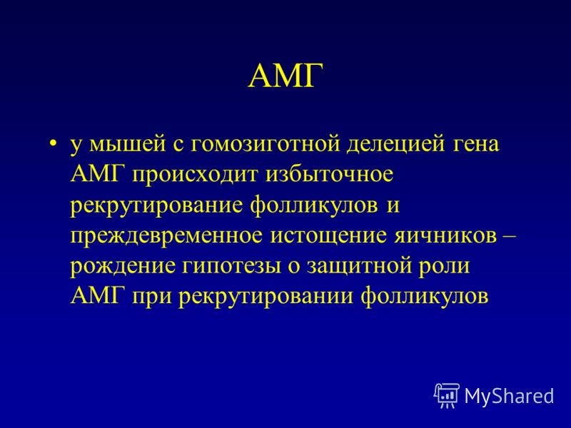 АМГ у мышей с гомозиготной делецией гена АМГ происходит избыточное рекрутирование фолликулов и преждевременное истощение яичников – рождение гипотезы о защитной роли АМГ при рекрутировании фолликулов