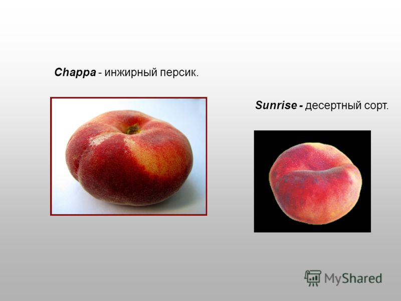 Chappa - инжирный персик. Sunrise - десертный сорт.