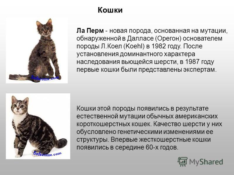 Кошки Ла Перм - новая порода, основанная на мутации, обнаруженной в Далласе (Орегон) основателем породы Л.Коел (Koehl) в 1982 году. После установления доминантного характера наследования вьющейся шерсти, в 1987 году первые кошки были представлены экс