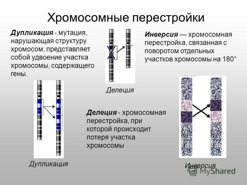 Хромосомные перестройки Делеция - хромосомная перестройка, при которой происходит потеря участка хромосомы Инверсия хромосомная перестройка, связанная с поворотом отдельных участков хромосомы на 180° Дупликация - мутация, нарушающая структуру хромосо