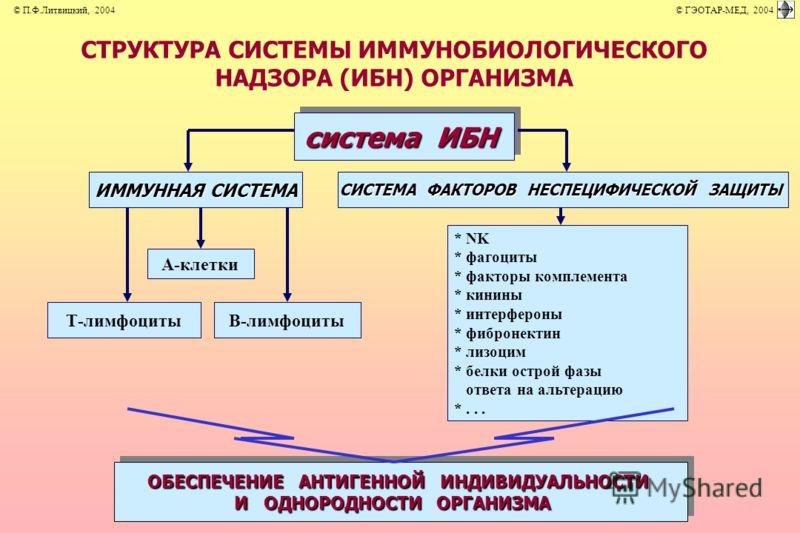СТРУКТУРА СИСТЕМЫ ИММУНОБИОЛОГИЧЕСКОГО НАДЗОРА (ИБН) ОРГАНИЗМА система ИБН ОБЕСПЕЧЕНИЕ АНТИГЕННОЙ ИНДИВИДУАЛЬНОСТИ И ОДНОРОДНОСТИ ОРГАНИЗМА ОБЕСПЕЧЕНИЕ АНТИГЕННОЙ ИНДИВИДУАЛЬНОСТИ И ОДНОРОДНОСТИ ОРГАНИЗМА А-клетки Т-лимфоцитыВ-лимфоциты ИММУННАЯ СИСТ