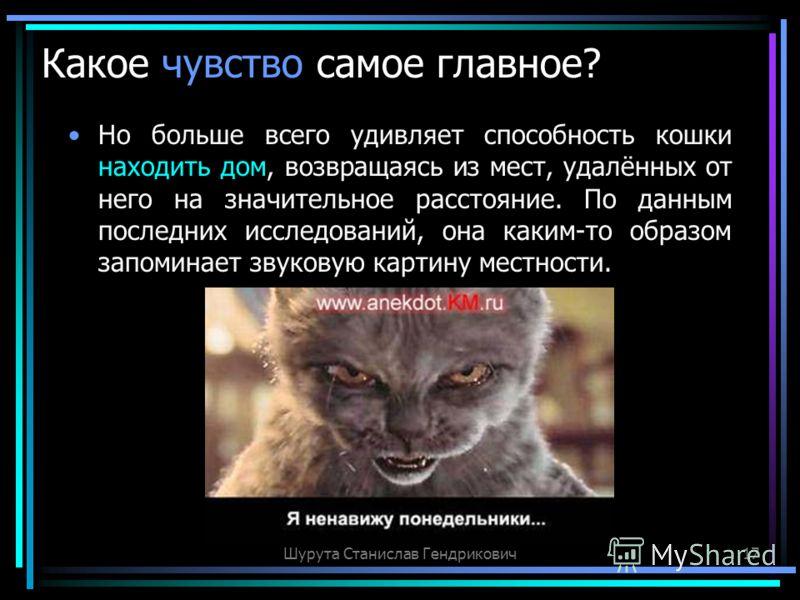 Шурута Станислав Гендрикович17 Какое чувство самое главное? Но больше всего удивляет способность кошки находить дом, возвращаясь из мест, удалённых от него на значительное расстояние. По данным последних исследований, она каким-то образом запоминает