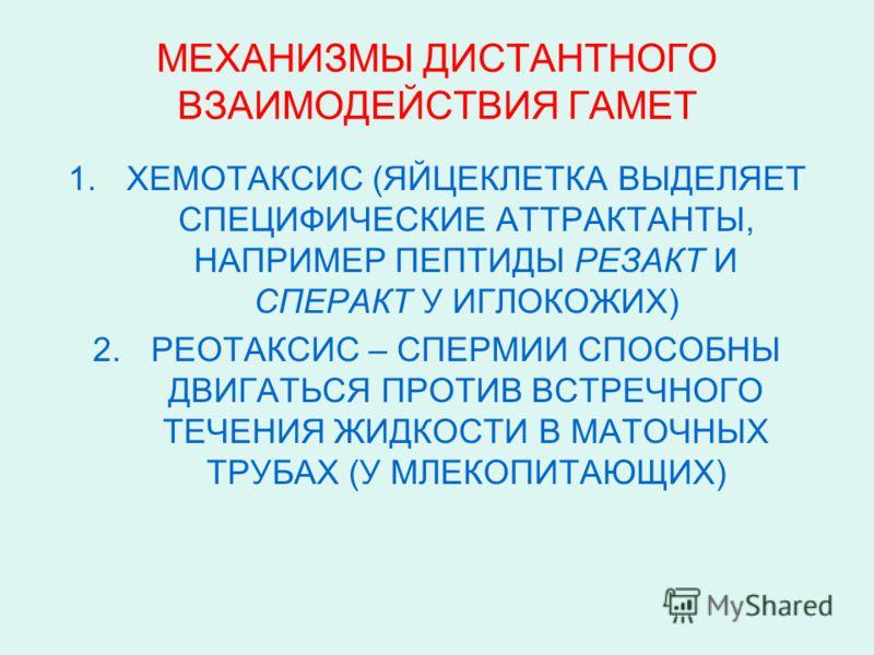 МЕХАНИЗМЫ ДИСТАНТНОГО ВЗАИМОДЕЙСТВИЯ ГАМЕТ 1.ХЕМОТАКСИС (ЯЙЦЕКЛЕТКА ВЫДЕЛЯЕТ СПЕЦИФИЧЕСКИЕ АТТРАКТАНТЫ, НАПРИМЕР ПЕПТИДЫ РЕЗАКТ И СПЕРАКТ У ИГЛОКОЖИХ) 2.РЕОТАКСИС – СПЕРМИИ СПОСОБНЫ ДВИГАТЬСЯ ПРОТИВ ВСТРЕЧНОГО ТЕЧЕНИЯ ЖИДКОСТИ В МАТОЧНЫХ ТРУБАХ (У МЛ